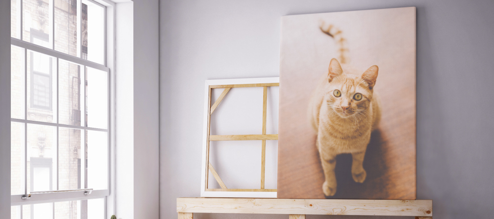 How much does it cost to make a canvas print. Photo canvas print with a cat.
