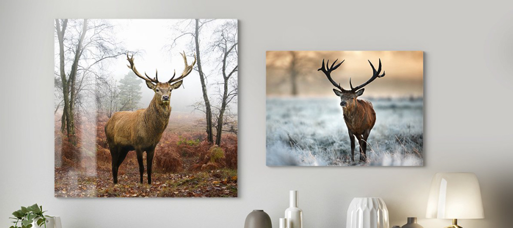 What is a metal print? Animal photography on metal prints.