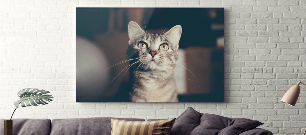 photo aluminum prints cat photo aluminum print