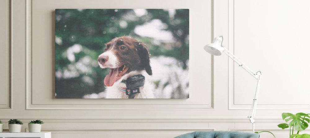 Sind günstige Leinwände schlechte Leinwände?. Weiße Fotoleinwand an grauer Mauer.