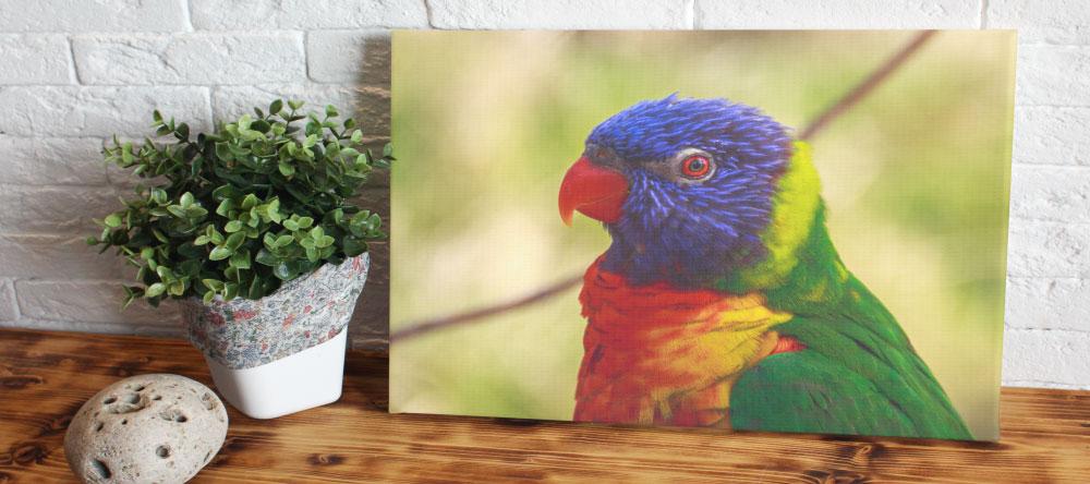 Was ist eine Fotoleinwand. Bild eines farbigen Vogels auf Leinwand.