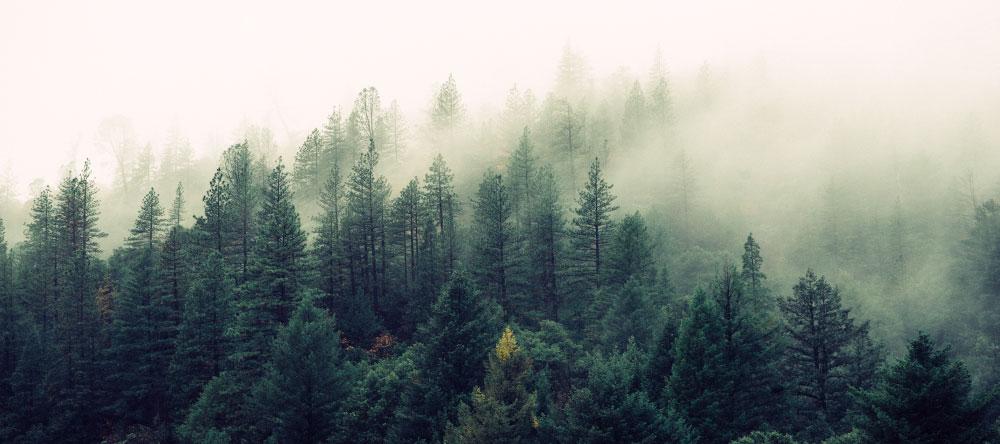 Was ist eine Fotoleinwand. Wald im Nebel.