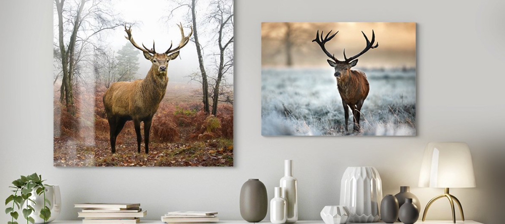 Unique Photo Gifts for Him. Two aluminium prints with deer.