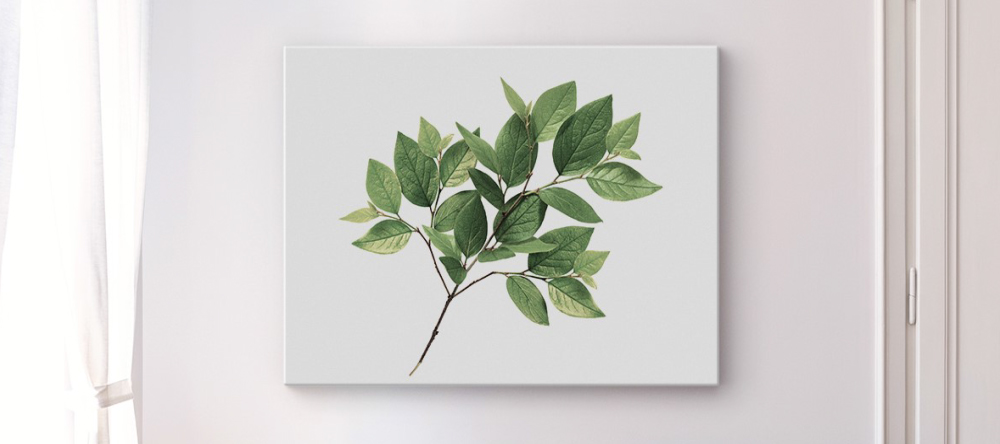What is Lamination on Canvas Prints. Print on wall showing leaves.