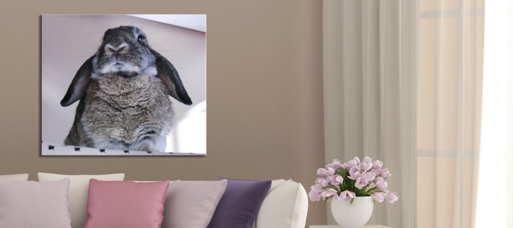 Should I Buy Canvas Prints from My-Picture.co.uk. Photo canvas print with cute rabbit.
