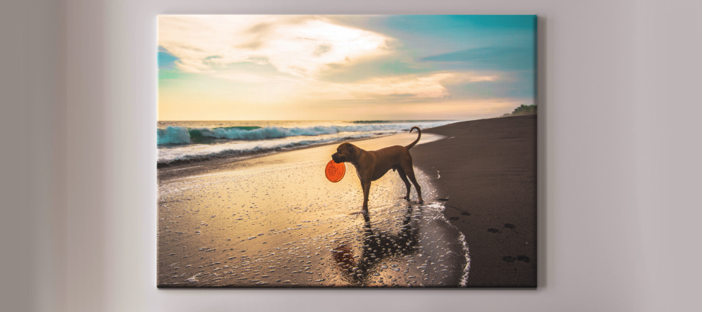 The Difference Between Canvas and Poster Prints: Which Should You Choose? Large size canvas print with featuring photo of dog.