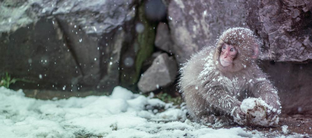 Personalised Photo Christmas Cards. Adorable infant monkey in blizzard.