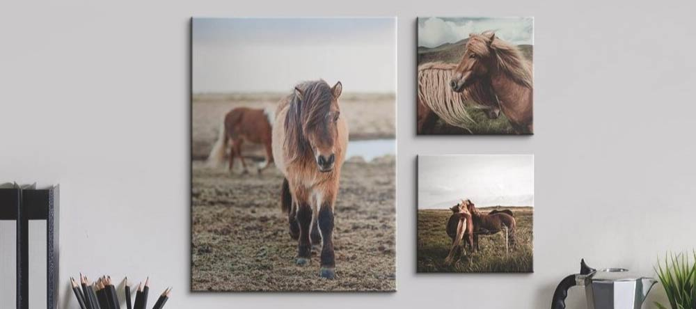 How We Get Your Canvas Prints Delivered on Time. Canvas prints featuring photos of horses.