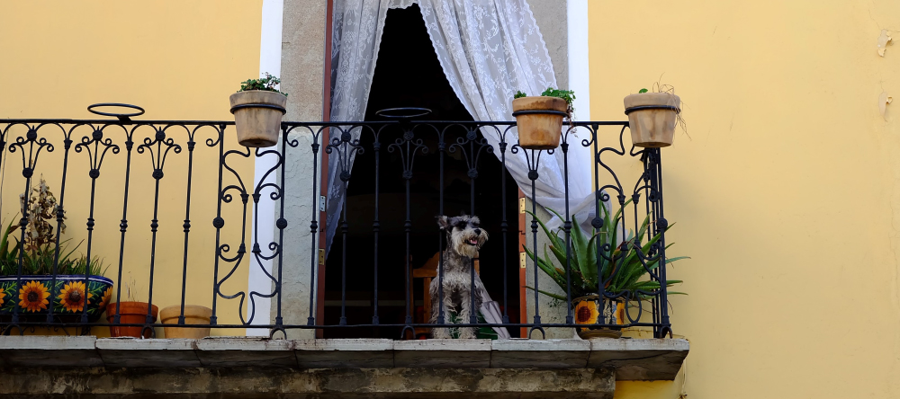 Decorating ideas for balcony. Beautiful old school balcony with plants, iron railing and dog.