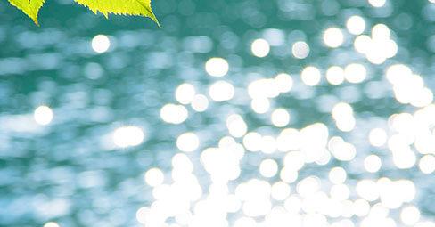 Utiliza la luz natural para capturar bellas fotografías